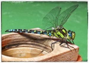 Huawei Galerie - Frank S. - Insekt_Makro