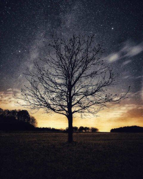 Baum Sterne